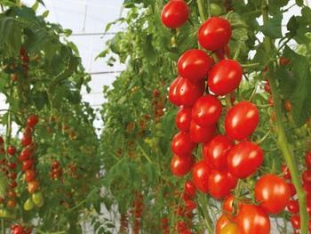 Bayer lanzará su cartera de semillas hortícolas ecológicas en 2022, centrándose en los cultivos clave para el mercado de los invernaderos y los invernaderos