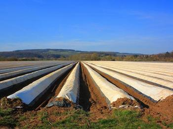 Farmers use mulch films to control weed growth and soil temperature.