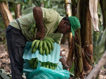 Banana producers across the globe are facing increased financial burdens amid soaring banana export costs and record low import prices, placing inordinate pressure on smallholder farmers and agricultural workers and posing a direct threat on their ability to earn a decent living.