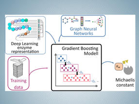 KI hilft, Enzymtätigkeit zu quantifizieren