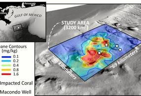 Hydrocarbon contamination from Deepwater Horizon