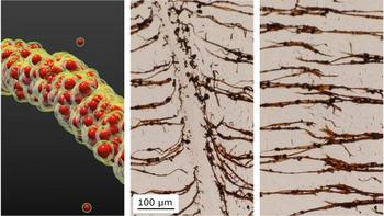 nanoparticles temperature responsive