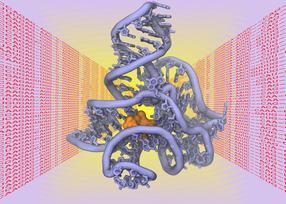 räumliche Struktur von Biomolekülen