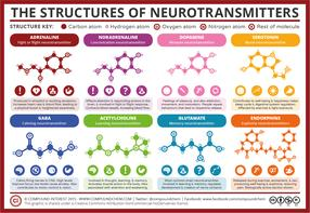 A Simple Guide to Neurotransmitters