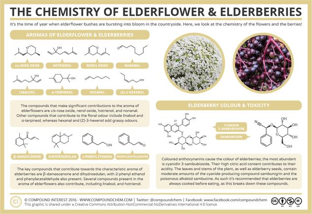The Chemistry of Elderflowers & Elderberries: Aroma, Colour, & Toxicity