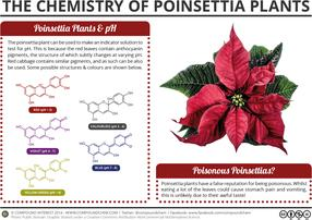 The Chemistry of Poinsettia Plants