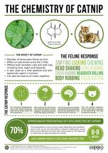 The Chemical Behind Catnip's Effect on Cats