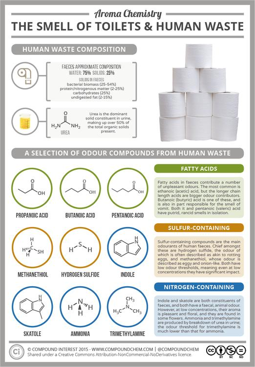 The Chemistry of the Smell of Toilets & Human Waste
