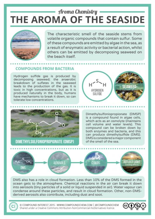 The Chemical Compounds Behind the Scent of the Sea