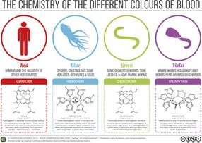 The Chemistry of The Colours of Blood