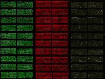 Protein-Microarrays