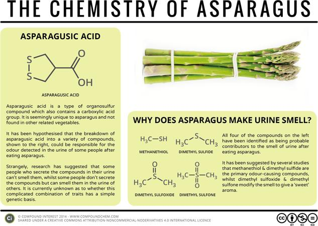 Why Does Asparagus Make Urine Smell? – The Chemistry of Asparagus