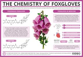 The Chemistry of Foxgloves – Poison & Medicine