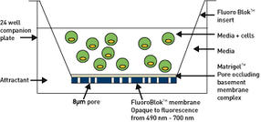 BMG_LABTECH-Analysis_of_Prostate_Tumour_Cell-Abb2