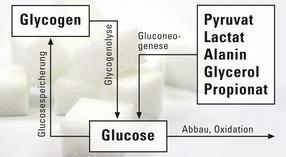 Glucosestoffwechsel