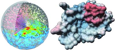 Wissenschaftler visualisieren biochemische Prozesse