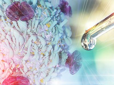 Neues Verständnis der Zellstabilität mit Potenzial zur Verbesserung von Immunzelltherapien